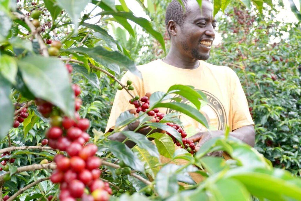 Ethiopian Green Coffee Beans
