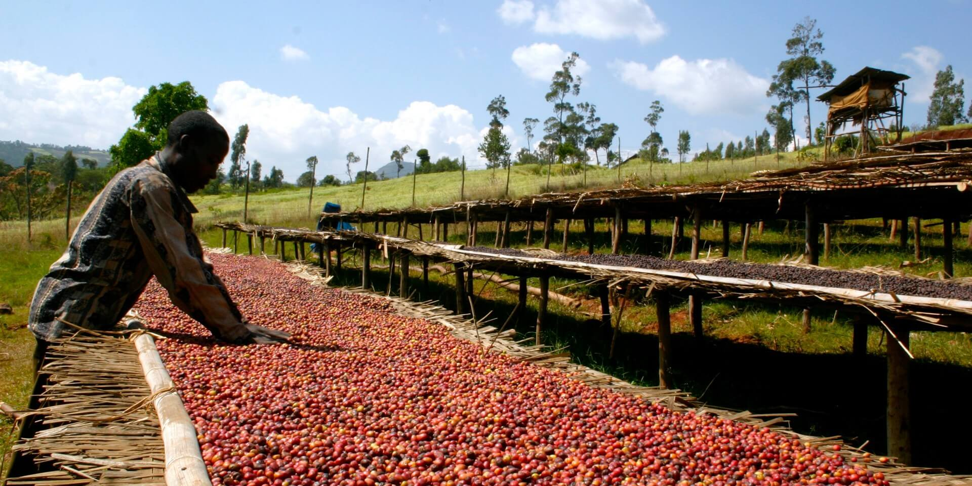 Ethiopian Coffee Farming